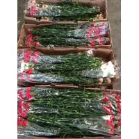 Λουλουδια Χονδρικης - γαρυφαλλα κοτσανια