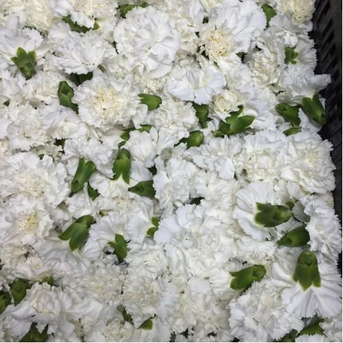 Λουλουδια Χονδρικης - garifalla kefalia leuka