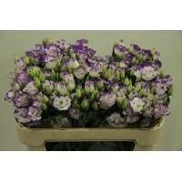 Λουλουδια Χονδρικης - λυσιανθοι λευκοι-λιλα