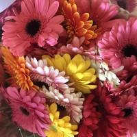 Λουλουδια Χονδρικης - zerberes mix
