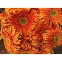 Λουλουδια Χονδρικης - zerberes portokali