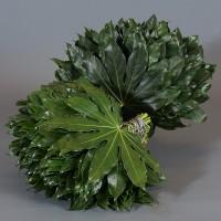 Λουλουδια Χονδρικης - Πρασιναδα - prasinades aralia