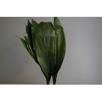 Πρασιναδα - prasinades aspidistra