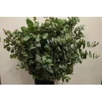Πρασιναδα - prasinades cinerea
