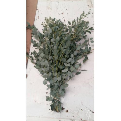 Λουλουδια Χονδρικης - Πρασιναδα - πρασιναδες gunny
