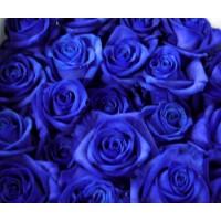 Τριανταφυλλα - τριανταφυλλα βαμμενα μλπε