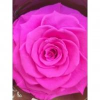 Τριανταφυλλα - τριαντάφυλλα preserved hot pink