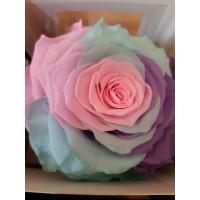 Τριανταφυλλα - τριαντάφυλλα preserved xxl Unicorn
