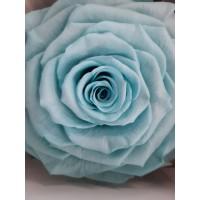 Τριανταφυλλα - τριαντάφυλλα preserved Blue