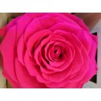 Τριανταφυλλα - τριαντάφυλλα preserved Fuchia