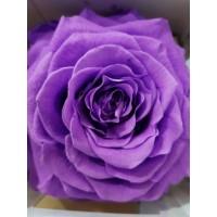 Τριανταφυλλα - τριαντάφυλλα preserved xxl lilac