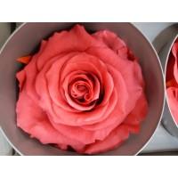 Τριανταφυλλα - τριαντάφυλλα preserved dark pink