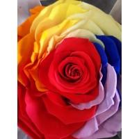 Τριανταφυλλα - τριαντάφυλλα preserved xxl rainbow