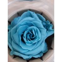 Τριανταφυλλα - τριαντάφυλλα preserved light blue