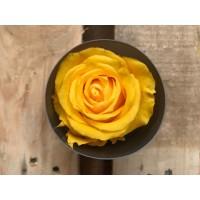 Τριανταφυλλα - τριαντάφυλλα preserved warm yellow