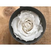 Τριανταφυλλα - τριαντάφυλλα preserved white