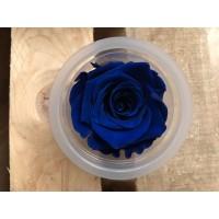 Τριανταφυλλα - τριαντάφυλλα preserved splendid ocean blue
