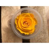 Τριανταφυλλα - τριαντάφυλλα preserved splendid sunny yellow