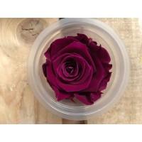 Τριανταφυλλα - τριαντάφυλλα preserved splendid bridal plum