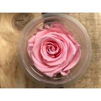 Τριανταφυλλα - τριαντάφυλλα preserved Baby pink