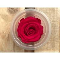 Τριανταφυλλα - τριαντάφυλλα preserved splendid hot pink