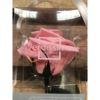Τριανταφυλλα - τριαντάφυλλα preserved mini amorosa pink