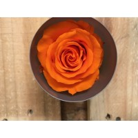 Τριανταφυλλα - τριαντάφυλλα preserved orange