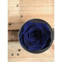 Τριανταφυλλα - τριαντάφυλλα preserved dark blue
