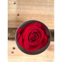 Τριανταφυλλα - τριαντάφυλλα preserved red
