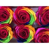 Τριανταφυλλα - τριαντάφυλλα preserved rainbow