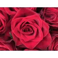 Τριανταφυλλα - triantafilla testa rossa