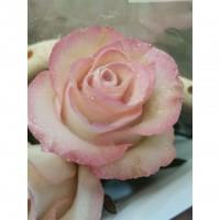 Τριανταφυλλα - triantafilla wax ρόζ