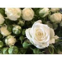 Τριανταφυλλα - τριανταφυλλο mini  ασπρο