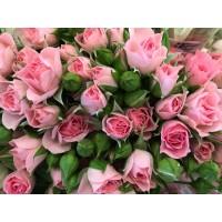 Τριανταφυλλα - τριανταφυλλο mini  απαλο ροζ