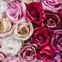 τριαντάφυλλα χονδρικής