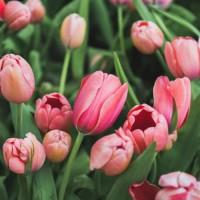 λουλούδια εποχιακά