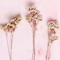 λουλουδια χονδρικης