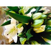Λουλουδια Χονδρικης - oriental leuka