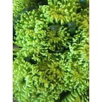 Λουλουδια Χονδρικης - xrysanthema kefalata