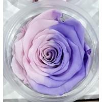 Τριανταφυλλα - τριαντάφυλλα preserved bi-colour pink-purple