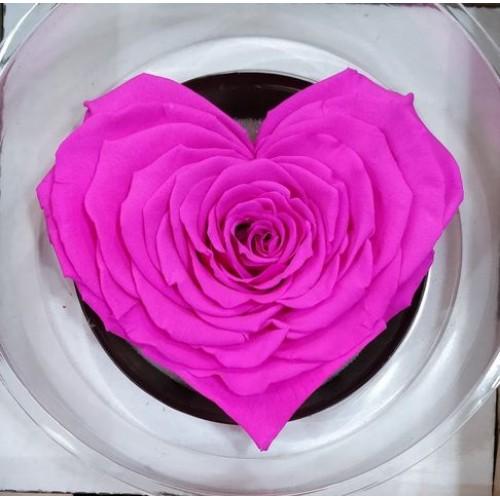 Τριανταφυλλα - τριαντάφυλλo preserved xxl fuchsia