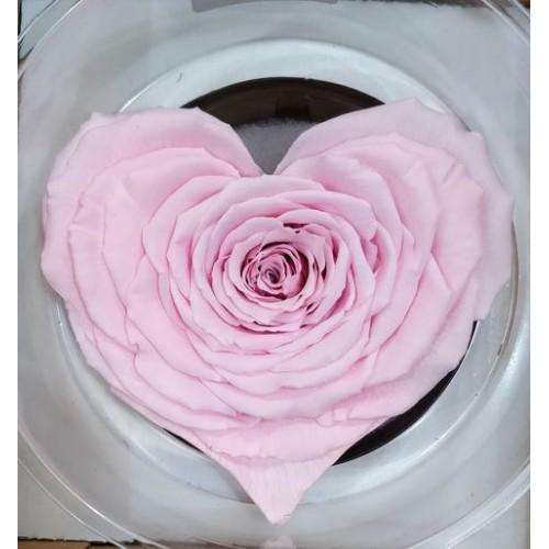 Τριανταφυλλα - τριαντάφυλλo preserved xxl pink