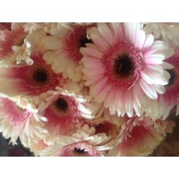 Λουλουδια Χονδρικης - zerberes dixrwmh